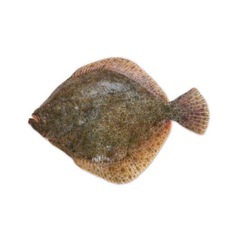 Rodaballo de Galicia. 1.5 - 2 kg