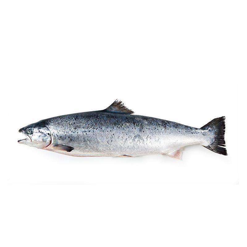 Salmón Noruego. 1 kg